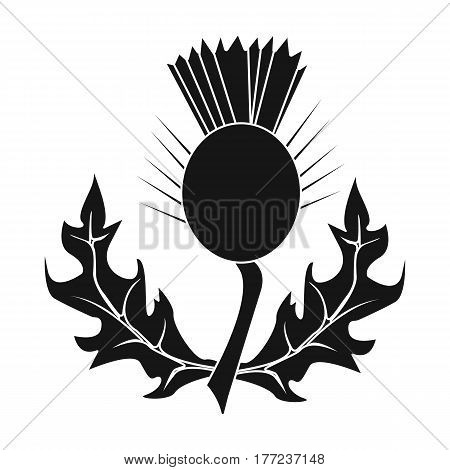 Thistles with green leaves.Medicinal plant of Scotland.Scotland single icon in black style vector symbol stock web illustration.