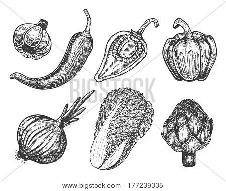Set hand drawn elements with sketch style vegetables. Different peppers. Fresh cabbage. Artichoke and onion