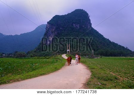 Quang Binh Countryside Landscape With Amazing Mountain