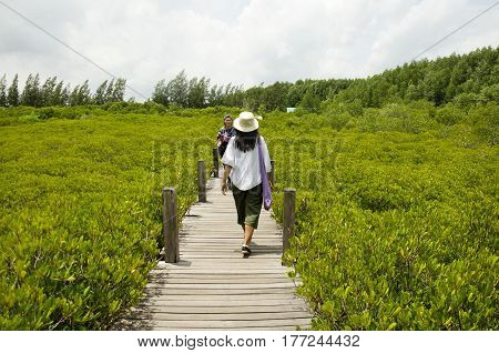 Traveler Thai Woman Walking On Wooden Bridge For Travel And Visit Golden Mangrove Field Thai Name Tu