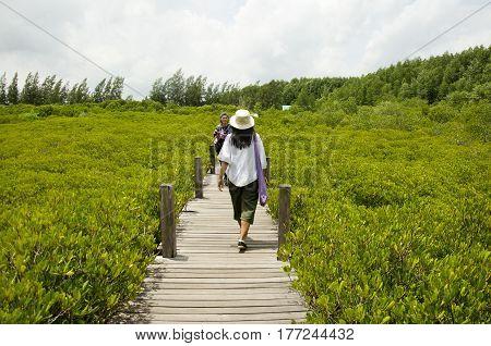 Traveler Thai Woman Walking On Wooden Bridge For Travel And Visit Golden Mangrove Field Thai Name Tu