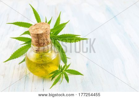 Marijuana Plant And Cannabis Oil