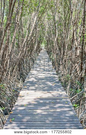 Wooden bridge walkway into the sea with tree tunnel of mangrove forest.