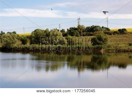 Landscape with river. Magpie flies over water on sunny morning. Electric pylons on shore among trees