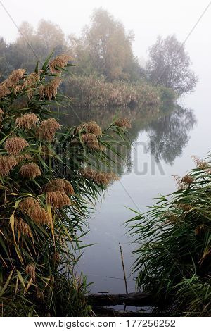 Foggy morning on river. Autumn landscape with reeds in foreground and trees in background. Beautiful nature in mist. Sad mood