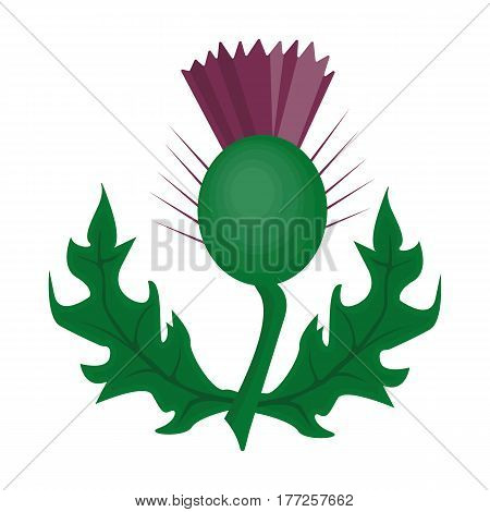 Thistles with green leaves.Medicinal plant of Scotland.Scotland single icon in cartoon style vector symbol stock web illustration.