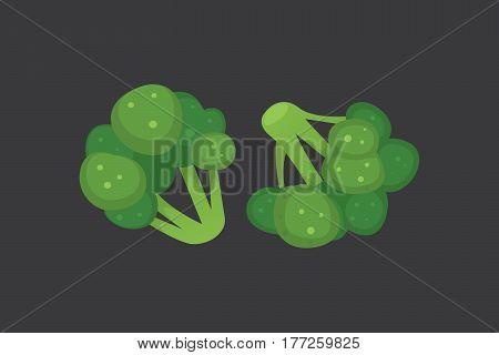 broccoli cartoon vector illustration. ripe brocolli cabbage vegeterian fresh natural food