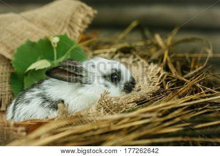 Cute Rabbit Bunny Sitting In Natural Hay