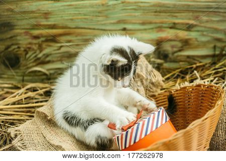 Cute Small Cat Playing With Gift Box