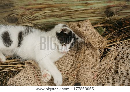 Cute Small Cat Lying On Sackcloth In Hay