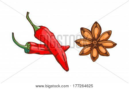 Red chilli pepper with anise star food vegetable ingredient paprika spicy and fresh vegetarian color organic ingredient vector illustration. Spices seasoning hand drawn style food herb element.