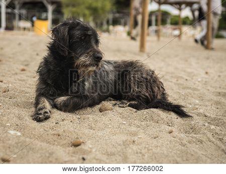 Dogs On The Beach, Schinias, Greece