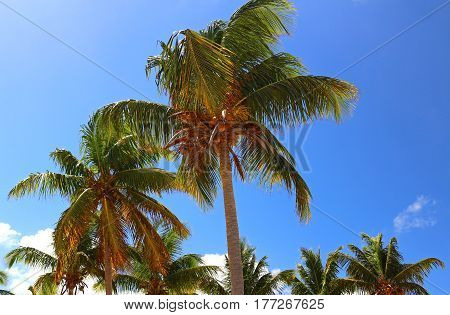 Palm trees blowing in the wind against a bright blue sky