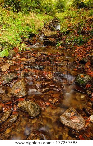 Autumn creek with rocks and green ferns growing