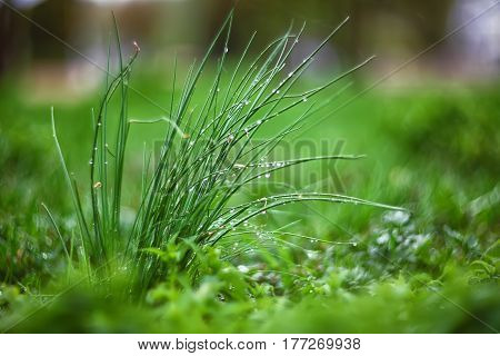 green plants with a blurred background back. Morning dew. Group of plants at foreground