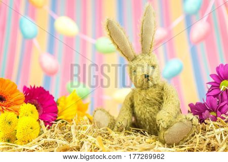 Easter Bunny Rabbit, Fresh Flowers Eggs And Stripes Background.