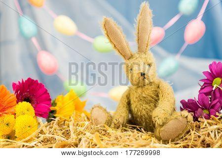 Easter Bunny Rabbit, Fresh Flowers, Egg Garland. Looking Forward.