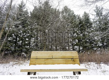 Closeup of wooden bench covered with snow in a tall pine forest winter background