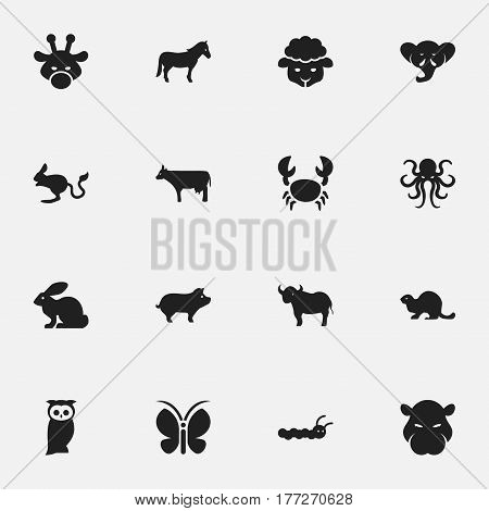 Set Of 16 Editable Zoo Icons. Includes Symbols Such As Hippopotamus, Ox, Proboscis And More. Can Be Used For Web, Mobile, UI And Infographic Design.