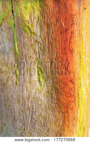 Texture of pale browns orange yellow and green from weathered wood beach post with clinging mossy marine flora.