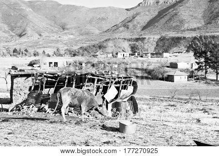 In Lesotho     Street Village