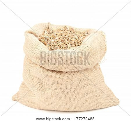 wheat grain isolated on white background. A close up