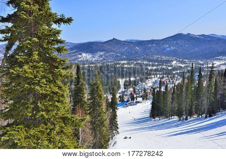 Sunny spring day in the mountain ski resort Sheregesh Western Siberia Russia. Mountain village pistes and ski people walking and skiing and beautiful spring landscape with warm sunny weather fluffy snow blue sky and evergreen fir trees.