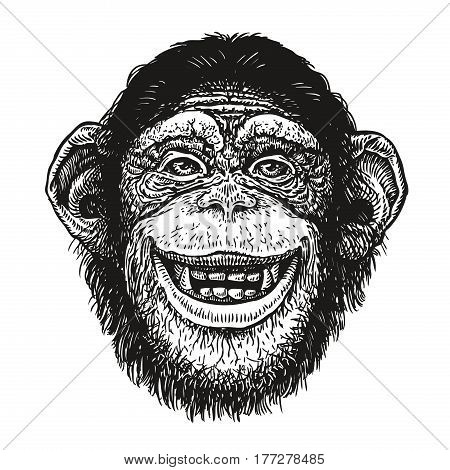 hand drawn portrait of chimpanzee. Funny monkey, neanderthal. Sketch vector illustration isolated on white background