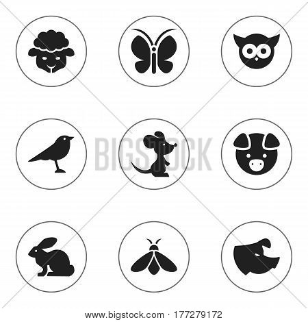 Set Of 9 Editable Zoology Icons. Includes Symbols Such As Sheep, Catbird, Sow And More. Can Be Used For Web, Mobile, UI And Infographic Design.