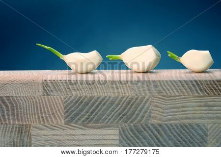 three heads of garlic are on the tree on blue background