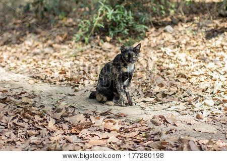 Brown And Black Cat In The Wild