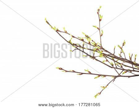 Spring Branch Isolated