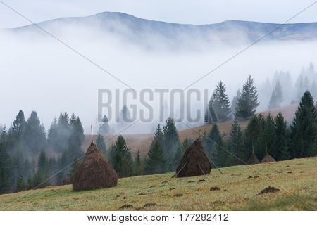 Autumn landscape in the mountains. Field with stacks of dry hay for cattle. Sunny morning. Fir forest on the slopes. Carpathians, Ukraine, Europe