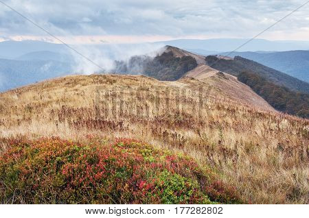Mountain landscape on a cloudy day. Bush of blueberries and dry grass on a meadow. Borzhava Range, Carpathians, Ukraine, Europe