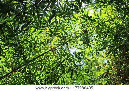 beautiful green background with enlightened bamboo leaves