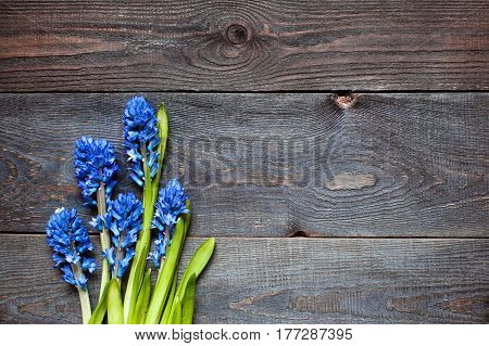 Wooden brown aged background with blue hyacinths