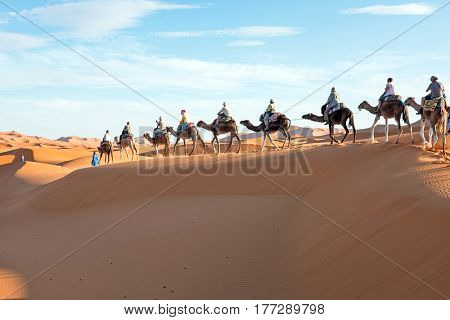 Camel caravan going through the sand dunes in the Sahara Desert, Morocco.