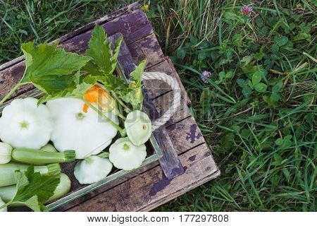 Full Wooden Box Of Green Courgettes And Squashes On The Wooden Background