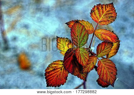 Dried raspberry leaves on a blue background