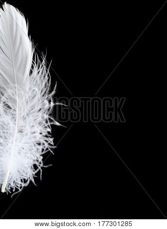 half of the white fluffy feather on a black background