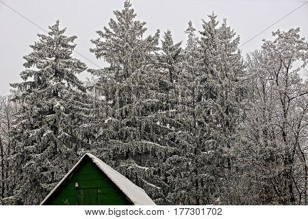 The roof of green wooden house on the edge of a winter forest