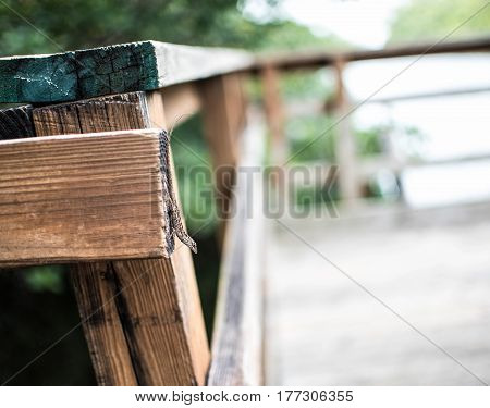 lizard in park on a wooden rail