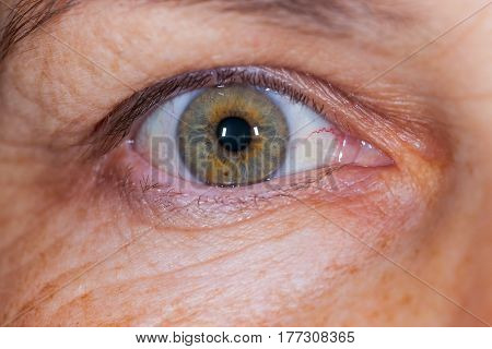Extre close up picture of an elderly female's green eye