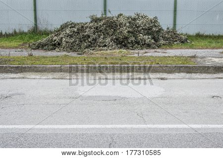 Collection of pruned piled leaves used in agriculture ad fetilizer