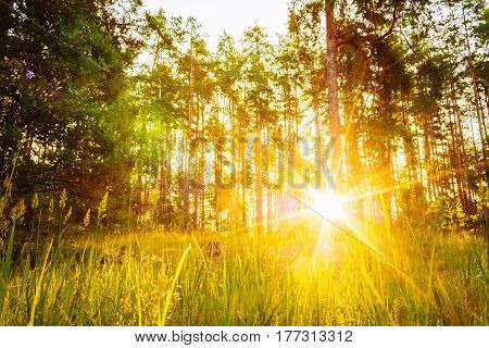 Sunset Or Sunrise In Forest Landscape. Sun Sunshine With Natural Sunlight And Sun Rays Through Woods Trees In Summer Forest. Beautiful Scenic View