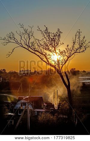 Silhouette of a tree in sunset Over the village in Belarus