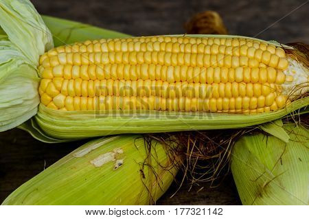 sweet corn with some ears partially husked