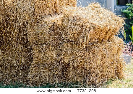 Piles of straw detail of piled straw for animal feed