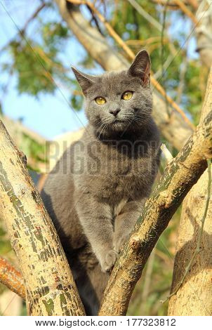 wandering gray cat sitting on tree in Istanbul