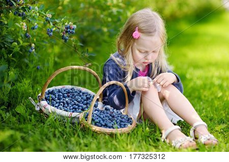 Cute Little Girl Picking Fresh Berries On Organic Blueberry Farm On Warm Summer Day